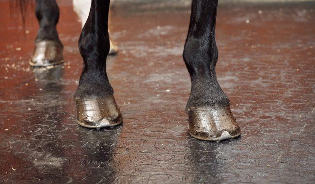 BELMONDO Classic - mit verstärkter Oberfläche für besonders schwere und umtriebige Pferde