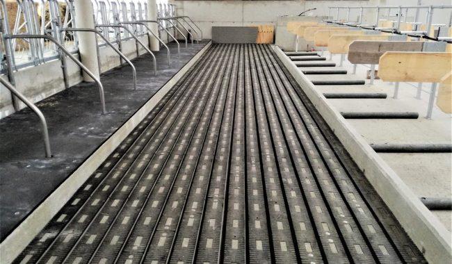 Laufgangplatten Meadowfloor - mit Gummibelag für mehr Tierkomfort und sehr hohe Trittsicherheit